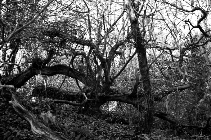 Nunnery Woods 1.jpg
